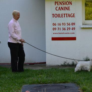 Hausse des tarifs 2015 de la pension  canine et fermeture le DIMANCHE